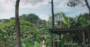 Bỏ túi top 10 villa Ba Vì có bể bơi