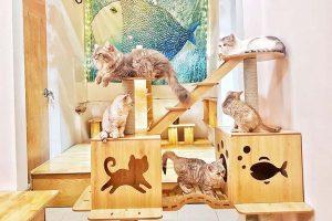 Những quán cafe mèo Hà Nội dễ thương